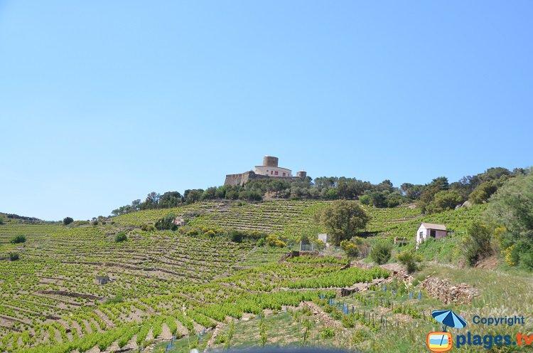 Vignobles de la Côte Vermeille à côté de Collioure