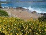 Piscona Beach - Olmeto