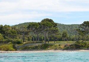 Spiaggia della Vignasse