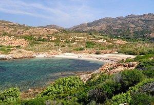 Vana Cove  - Palasca
