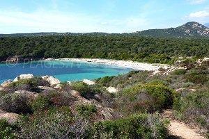 Spiaggia di Pisciu Cane