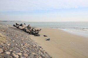 Sternes Beach - Berck